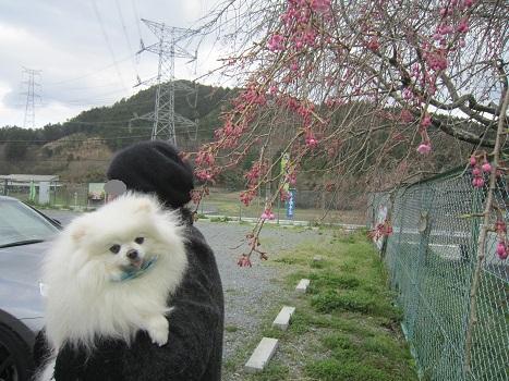 春の山をドライブ_b0177436_22141981.jpg