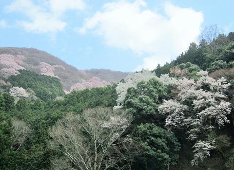 春の山をドライブ_b0177436_2215963.jpg