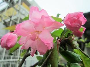 春の山をドライブ_b0177436_22385867.jpg