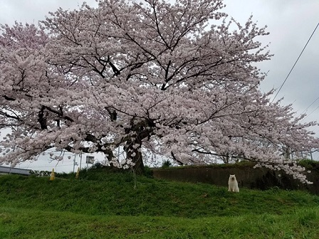 春の山をドライブ_b0177436_2240292.jpg