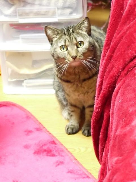 猫のお留守番 さくらちゃん編。_a0143140_20405300.jpg