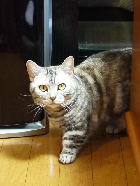 猫のお留守番 アイリスちゃん編。_a0143140_20470287.jpg