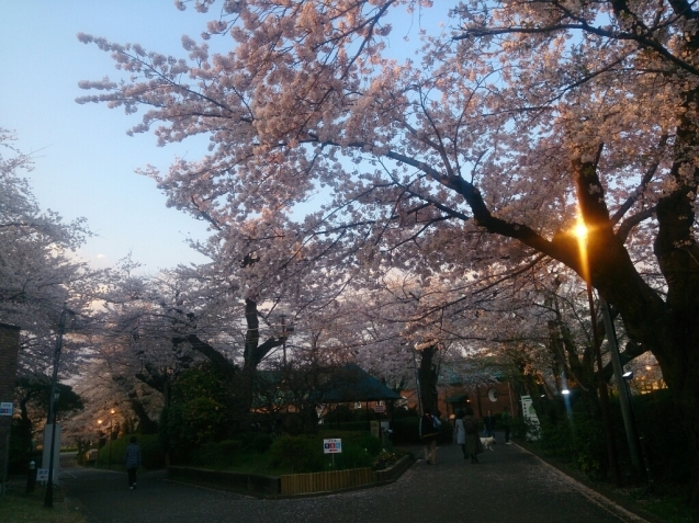 4月の女子会…桜♪_f0323446_23081427.jpg