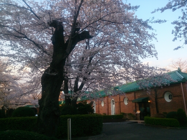 4月の女子会…桜♪_f0323446_23081991.jpg