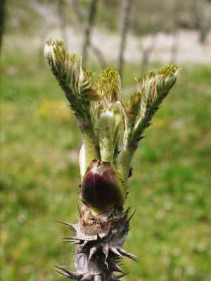 平成31年度の「天然たらの芽」予約受付スタート!!4月上旬からご予約順に発送します!_a0254656_18472796.jpg