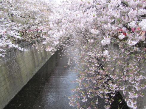 目黒川の桜 ひらひらと。。。Holy Thursday。。。聖木曜日。。。。 *。:☆.。†_a0053662_09423430.jpg