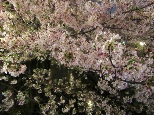目黒川の桜 ひらひらと。。。Holy Thursday。。。聖木曜日。。。。 *。:☆.。†_a0053662_09503615.jpg