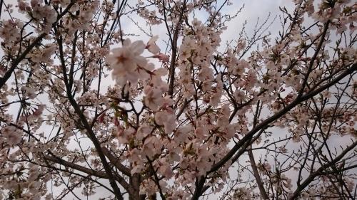 2017☆春スタート!_b0164376_14160408.jpg