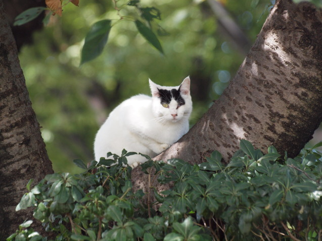 公園猫たち_e0232277_10495853.jpg