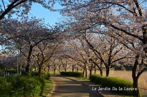 桜満開_f0329586_18110463.jpg