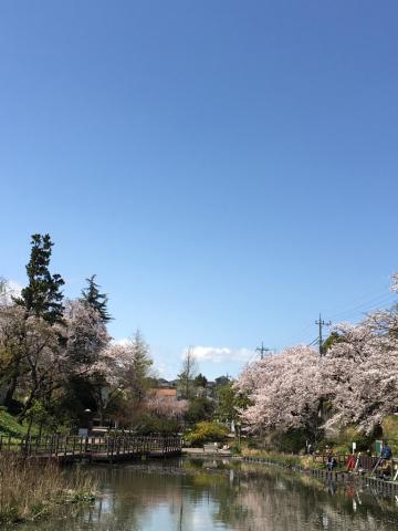 満開の桜と、、_c0195496_00220943.jpg