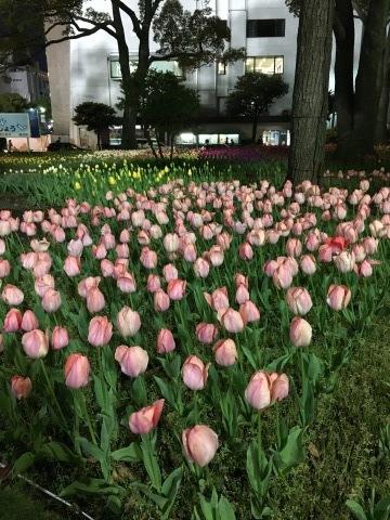 満開の桜と、、_c0195496_00275887.jpeg