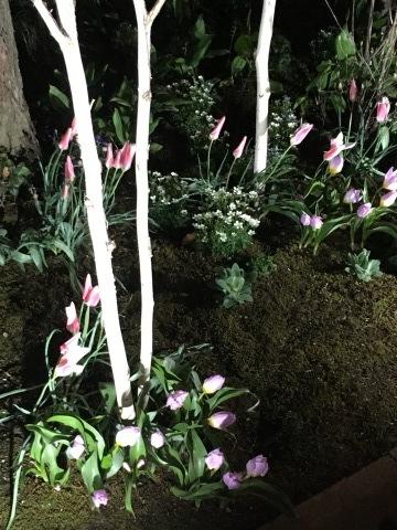 満開の桜と、、_c0195496_00374719.jpeg