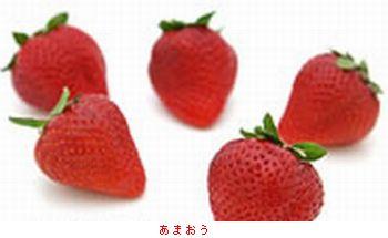 栃木・スカイベリー_b0044404_19523950.jpg