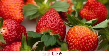 栃木・スカイベリー_b0044404_19525965.jpg
