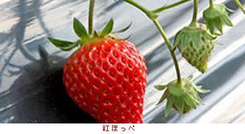 栃木・スカイベリー_b0044404_1954050.jpg