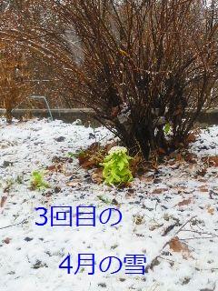 b0200310_1056170.jpg