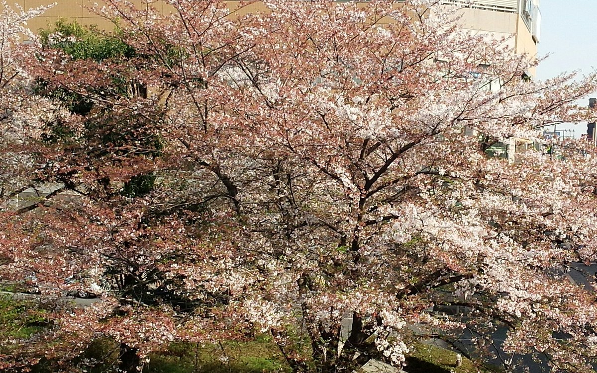 桜のパワーは,お肌を応援(^^)/_a0087512_011591.jpg