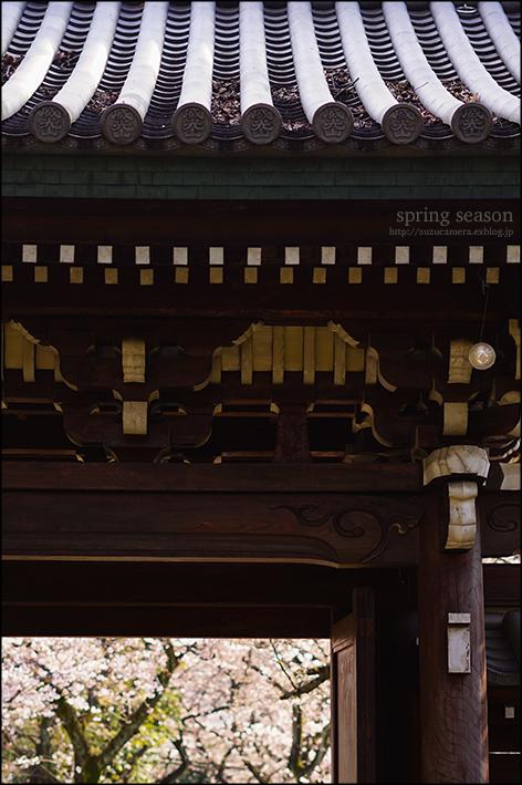 桜色の参道_f0100215_00070960.jpg