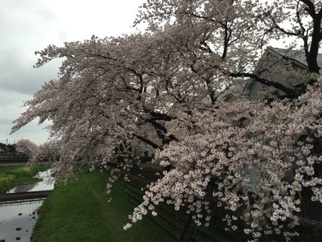 春のドライヴ。_f0113224_12261794.jpg