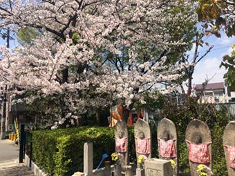 4月12日(水)【DeNA-阪神】(横浜)6ー8○_f0105741_1422222.jpg