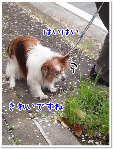 d0013149_01161112.jpg