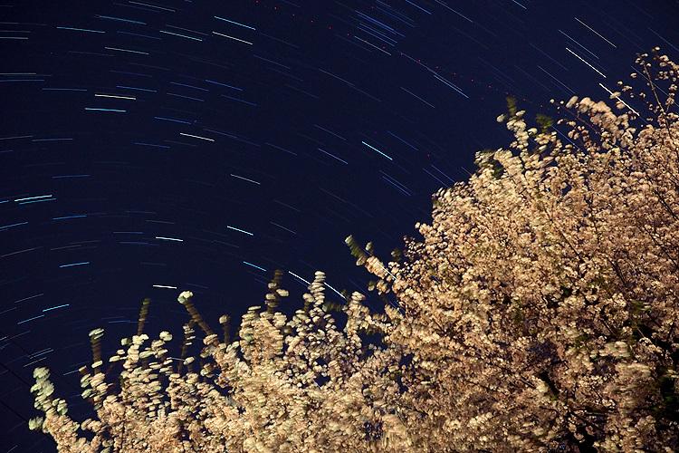 【Photo】夜桜と星の軌跡_b0008655_12193750.jpg