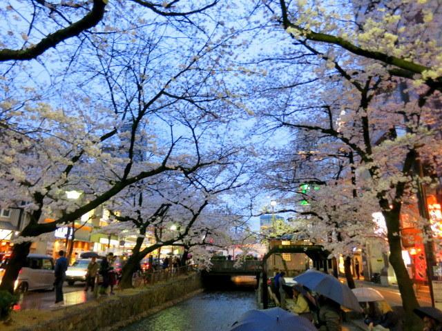 京都お花見 ⑤高瀬川沿いの桜*ライトアップ_f0236260_23012232.jpg