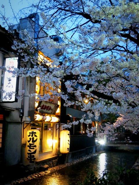 京都お花見 ⑤高瀬川沿いの桜*ライトアップ_f0236260_23073218.jpg