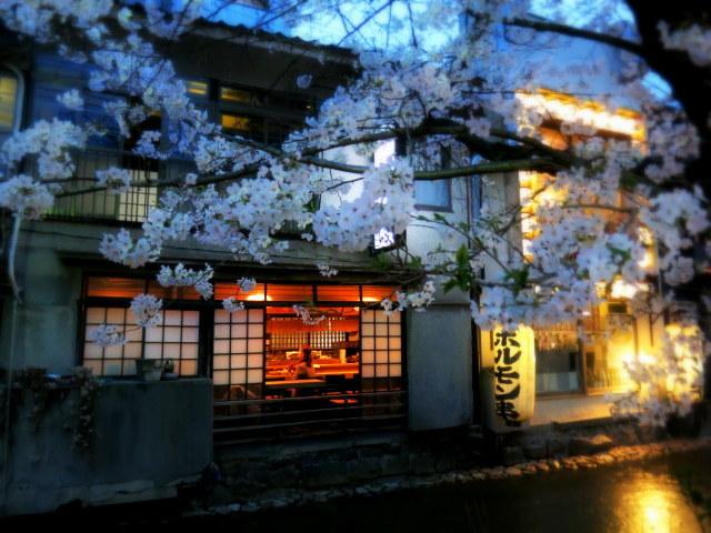 京都お花見 ⑤高瀬川沿いの桜*ライトアップ_f0236260_23091440.jpg
