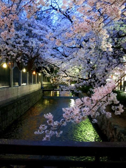 京都お花見 ⑤高瀬川沿いの桜*ライトアップ_f0236260_23104077.jpg