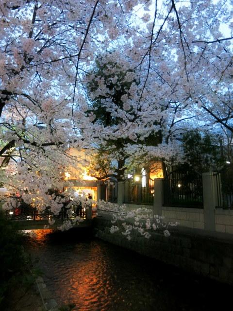京都お花見 ⑤高瀬川沿いの桜*ライトアップ_f0236260_23114628.jpg