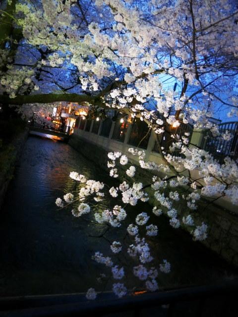 京都お花見 ⑤高瀬川沿いの桜*ライトアップ_f0236260_23122769.jpg