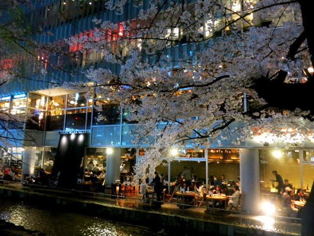 京都お花見 ⑤高瀬川沿いの桜*ライトアップ_f0236260_23504687.jpg