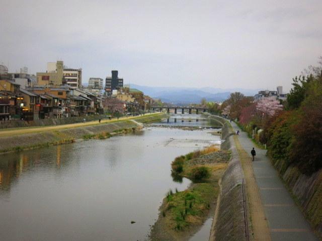 京都お花見 ⑤高瀬川沿いの桜*ライトアップ_f0236260_23583856.jpg