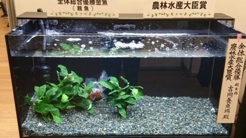 観賞魚フェア(2017)…vol.1_b0298605_22151905.jpg
