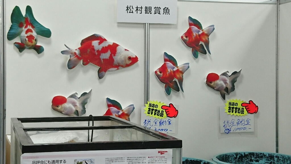 観賞魚フェア(2017)…vol.1_b0298605_22152760.jpg