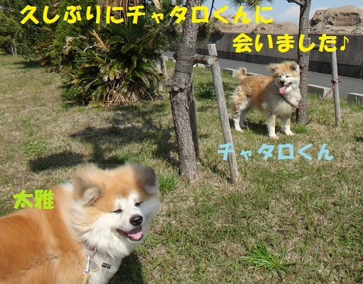 f0121712_15213037.jpg
