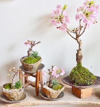 4、5月 盆栽ワークショップのご案内_d0263815_15000169.jpg
