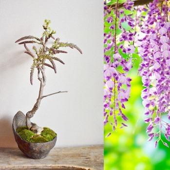 4、5月 盆栽ワークショップのご案内_d0263815_15064614.jpg