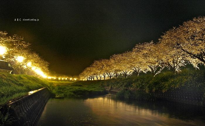 草場川ライトアップ 続き_f0315034_16403954.jpg