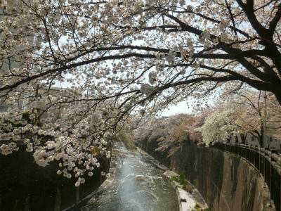 SAKURA  花びらのシャワーを浴びながら♪復路編_a0165160_11343921.jpg