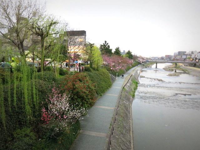 京都お花見 ⑤高瀬川沿いの桜*ライトアップ_f0236260_00021524.jpg