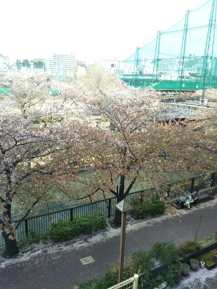目黒川がピンク一色に染まってる! _d0169072_18565718.jpg