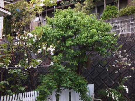 庭に夢中です!_b0214473_19233829.jpg
