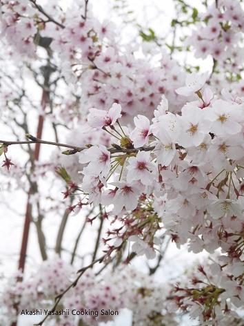 始まりの季節_f0361692_19063200.jpg