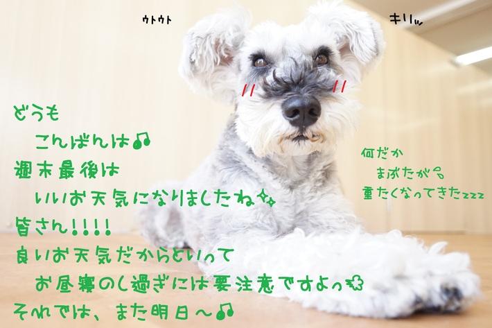 d0220513_18362788.jpg