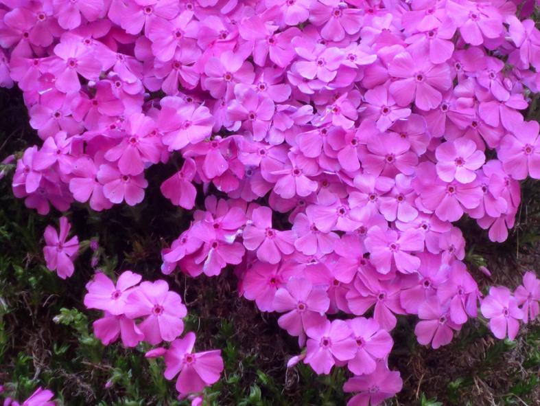 ■桜散り、桜咲く──週替わりの夕暮れ[4/16]_d0190217_2281383.jpg