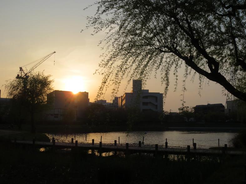 ■桜散り、桜咲く──週替わりの夕暮れ[4/16]_d0190217_2284693.jpg