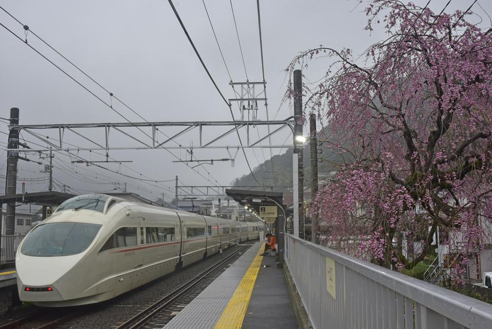 地元の桜_e0367330_21155559.jpg